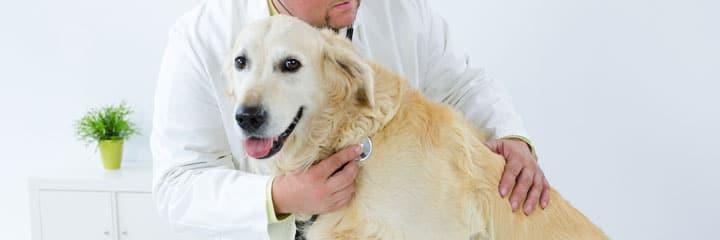 Der Gang zum Tierarzt sollte  dennoch niemals ausgelassen werden!
