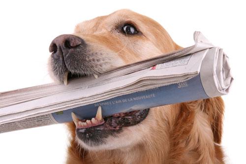 haushaltshilfe-hund