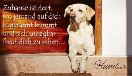 Ein Schöner Spruch Hunde