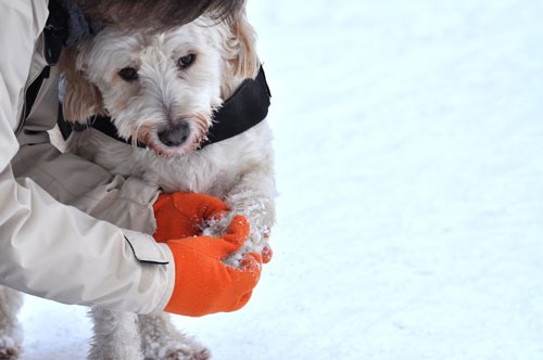 pfotenschutz-bei-hunden
