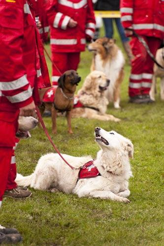 Ausbildung-zum-Rettungshund
