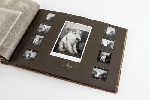 Hund-erinnerung