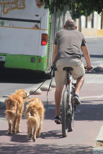 Hunde-mit-Fahrrad