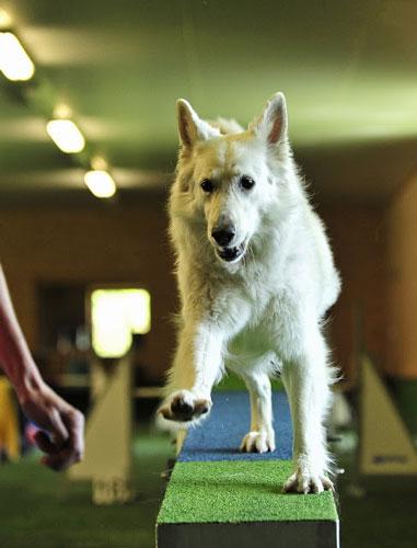 Hundeurlaub-Hotel-wolf