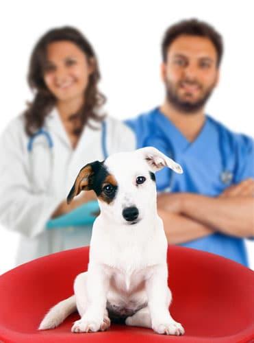 Krankenversicherung-Hund