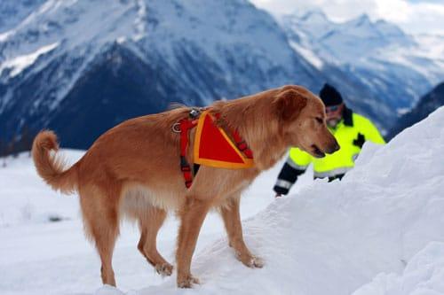 Lawinensuchhund