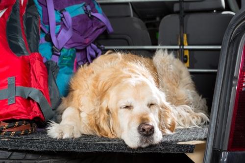 Reisesicherheit-hund-auto