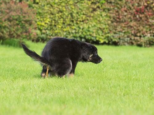 Durchfall Diarrhoe Hunde