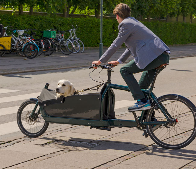 fahrradtransport-hund