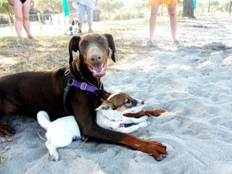 urlaubsbekanntschaft-hund
