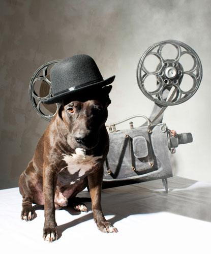 Filmhunde