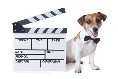 Hunde-vor-der-Kamera