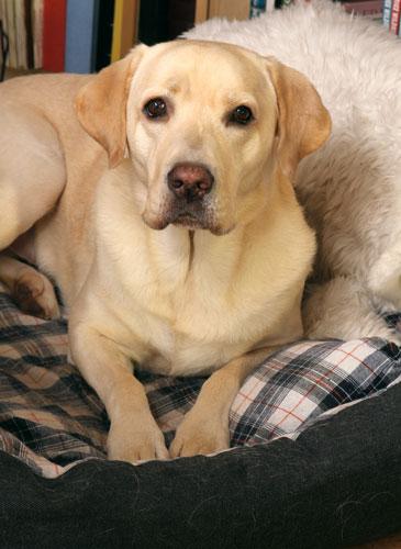 erste Möglichkeit der Vermeidung: Bereitstellen eines warmen, trockenen und zugfreien Liegebereiches für den Hund