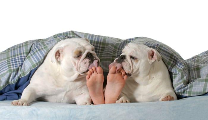 Hunde-lecken-fuesse