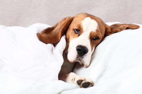 depressiver-Hund