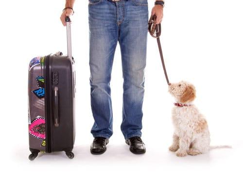 Flugreisen-mit-Hund