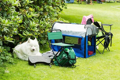 Die ihm bekannte Transportbox als Schlafbereich gibt dem Hund Sicherheit
