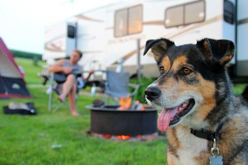 campen-mit-Hund