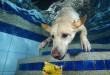 dog-diving