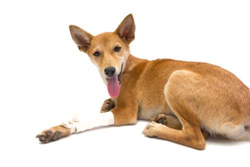 kompresse-hund
