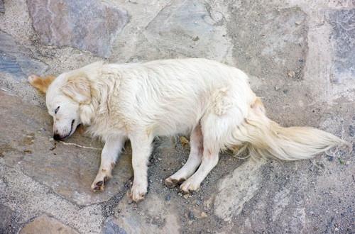 Was tun bei bewusstlosigkeit beim hund hunde - Wohnzimmer hallt was tun ...