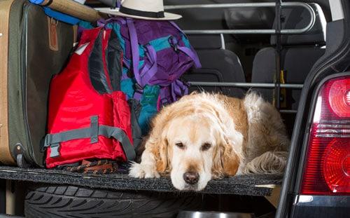 reisekrankheit-hund