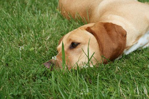 effektive hilfe gegen grasmilben hunde
