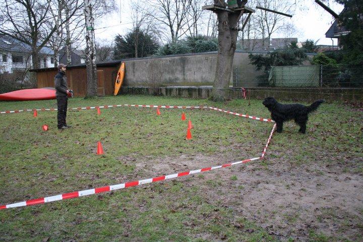ausmalbilder pferde longieren