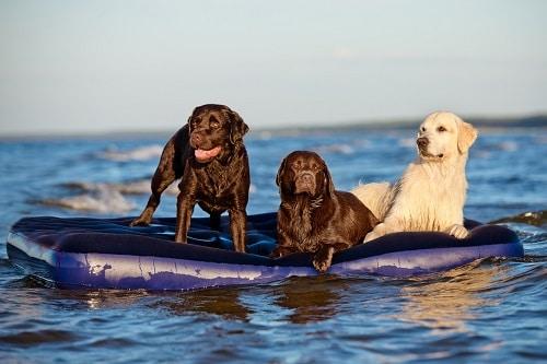 Hunde baden