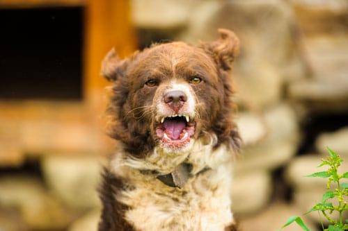 hund-mit-Tollwut