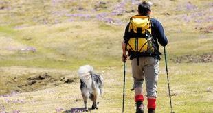 husky-wandern-rennsteig