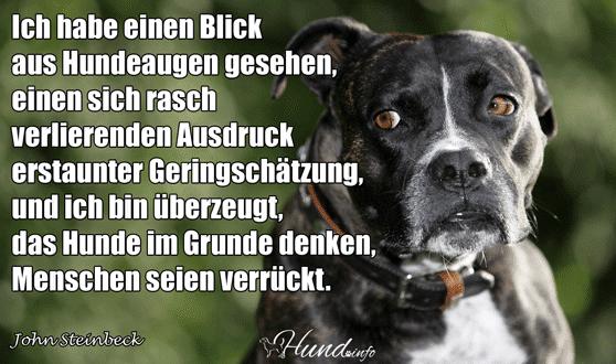 Was Hunde Denken Hunde