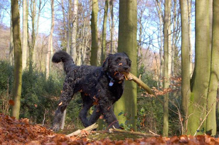 Herbstbild-Hund