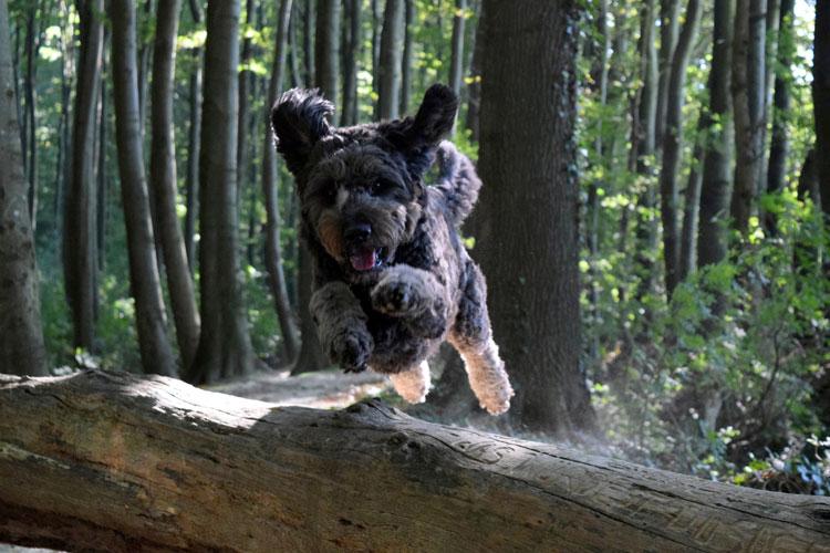 Herbstbild-Hund2