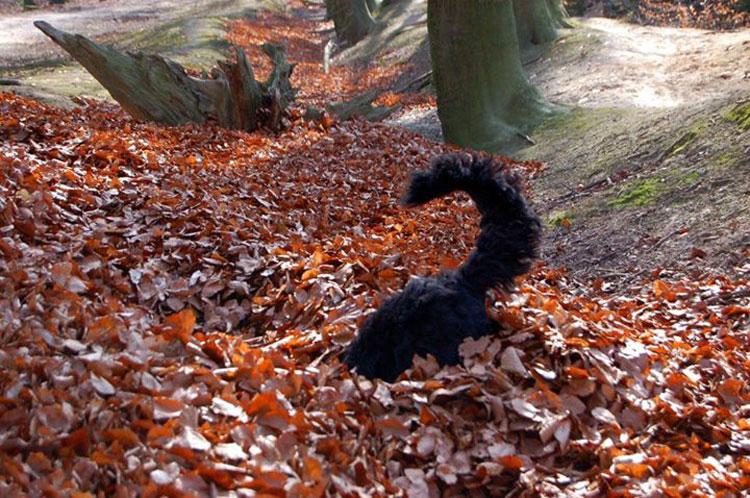 Herbstbild-Hund4