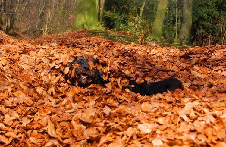Herbstbild-Hund5