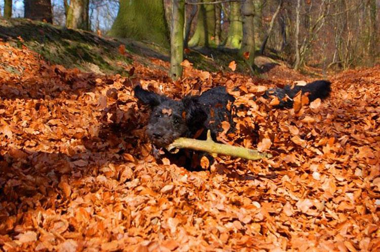 Herbstbild-Hund6