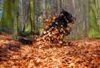 Herbstbild-Hund7