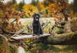 hund-im-Herbst