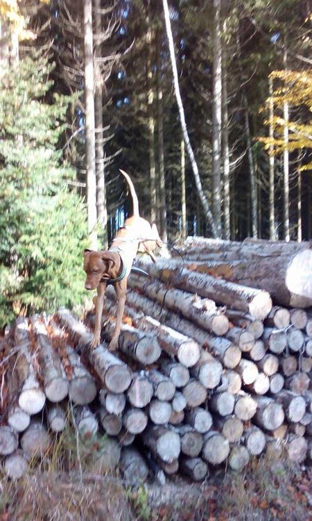 von Monika: Janos genießt den Herbst im Wald