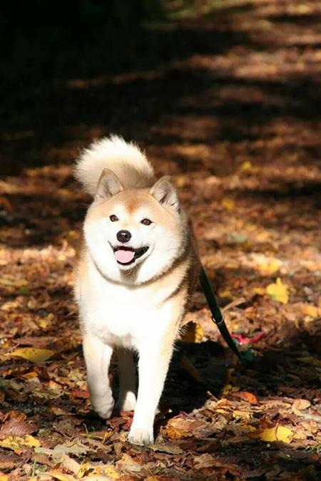 von Chrissi: Maja beim Herbst Spaziergang in der Buga