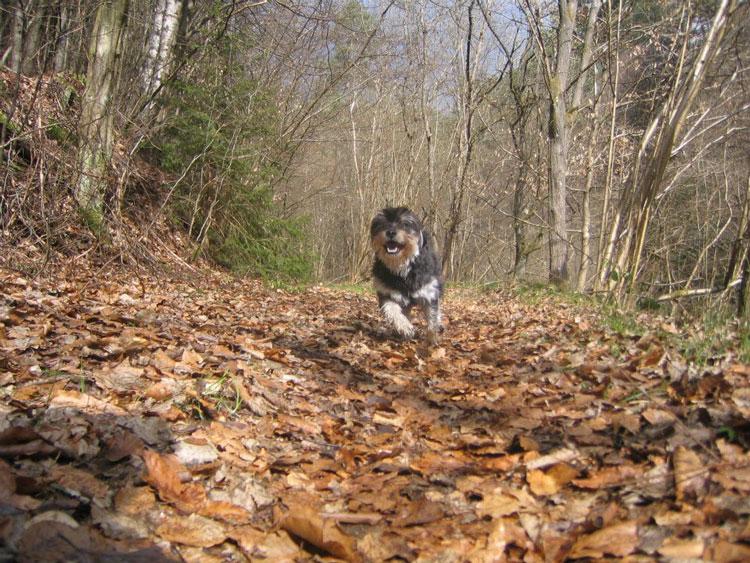 """von Tim: Ein Bild von meinem besten Freund """"Spike"""" im Lautrer Wald."""