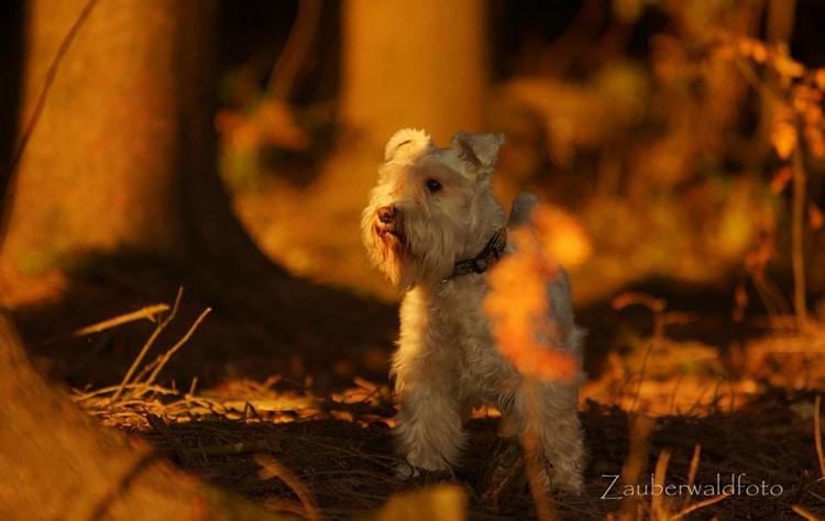 von Silvia: Dusty im Herbstwald