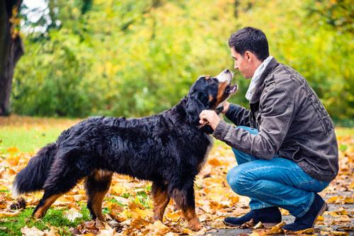 Wurmkur beim Hund ist wichtig