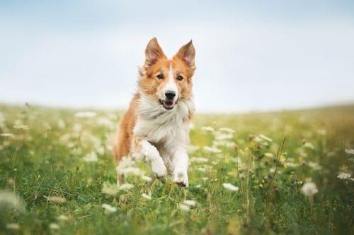 Ein gesunder Hund dank Prävention