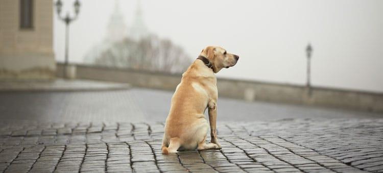 Wer hat mein Hund :-(