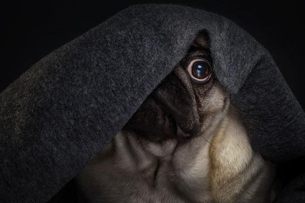 Lasst Eure Hunde an Silvester nicht alleine!!!