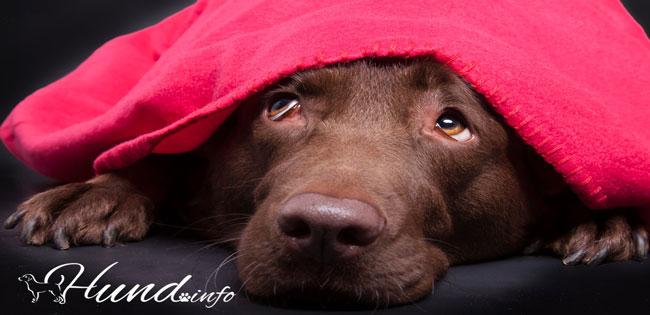 Silvester-macht-Hunden-angs