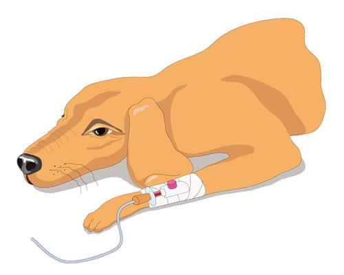 mit-blutspenden-hunden-helfen