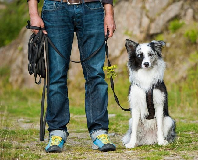 gelbe-schleife-hund